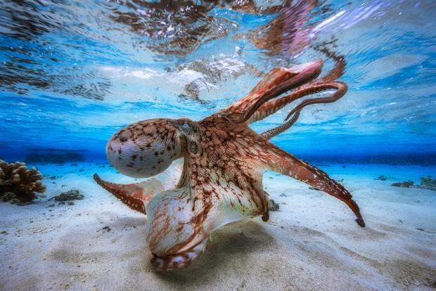 تصاویر زیر آب