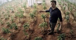 کاشت سیب زمینی در مریخ