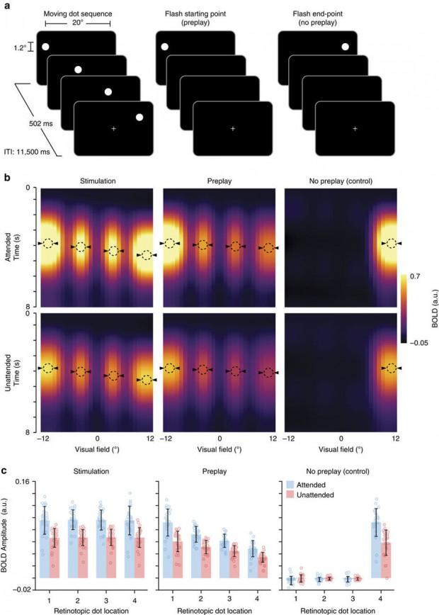 جدیدترین تحقیقات دانشمندان در مورد توانایی های مغز انسان در پیش بینی آینده