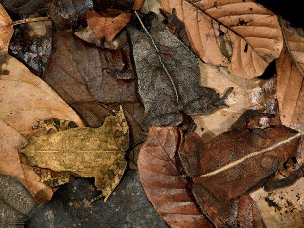 تصاویری باورنکردنی از اختفا و استتار حیوانات در طبیعت