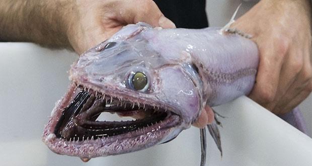 مارمولک ماهی