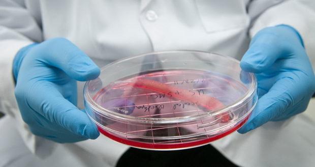 معرفی 11 عضو مصنوعی انسان که در محیط آزمایشگاهی پرورش داده شدهاند