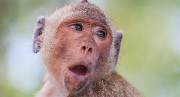 پاسخ به یکی از معماهای تکامل؛ چرا میمون ها نمیتوانند حرف بزنند؟