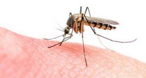 ۸ دلیل که باعث افزایش احتمال پشه گزیدگی میشوند
