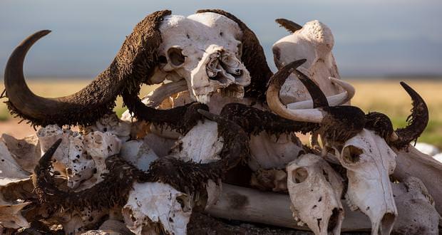 جدیدترین هشدار زیستمحیطی: ششمین انقراض جمعی زمین در حال وقوع است!