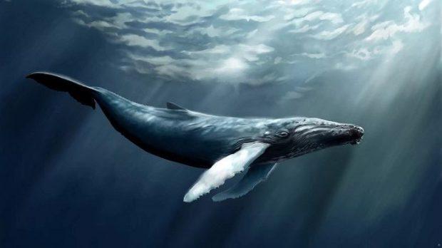 دانلود بازی نهنگ آبی