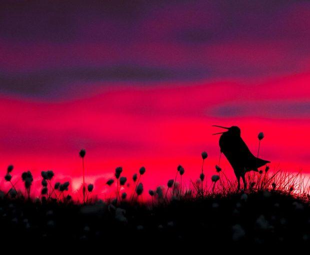 برترین تصاویر ثبت شده از پرندگان در سال 2017