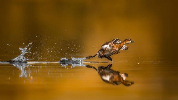 تصاویر ثبت شده از پرندگان