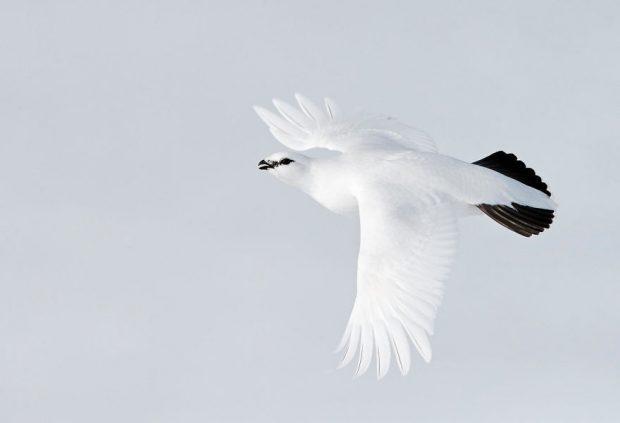برترین تصاویر پرندگان در سال 2017