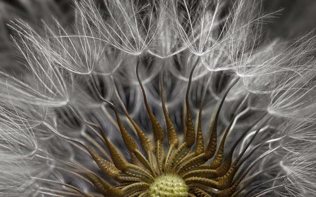 تصاویر میکروسکوپی شگفتانگیزی که دنیایی پنهان و عجیب را به ما نشان میدهند!