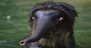 مجموعه تصاویری جالب و بامزه از حیوانات عجیب و غیر فوتوژنیک