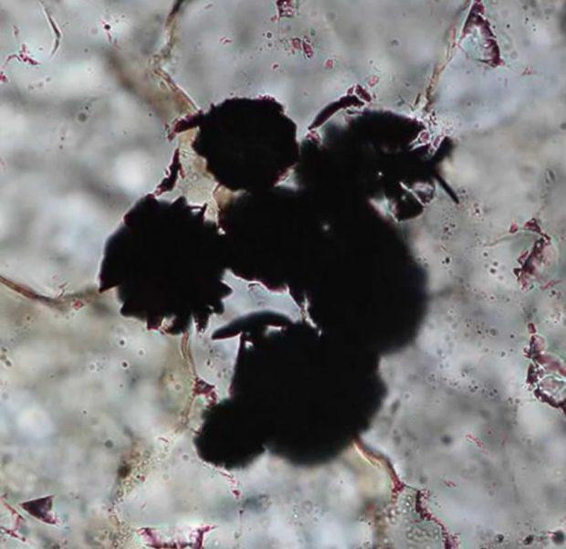 قدیمی ترین نشانه حیات در سنگهایی با عمر تقریبی 4 میلیارد سال کشف شد!