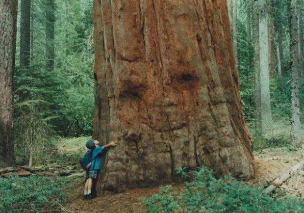 تصاویر دیدنی از درختان عجیب و غریب در سراسر دنیا