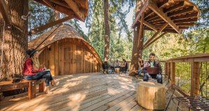 زندگی به سبک مایکروسافت: احداث خانه های درختی