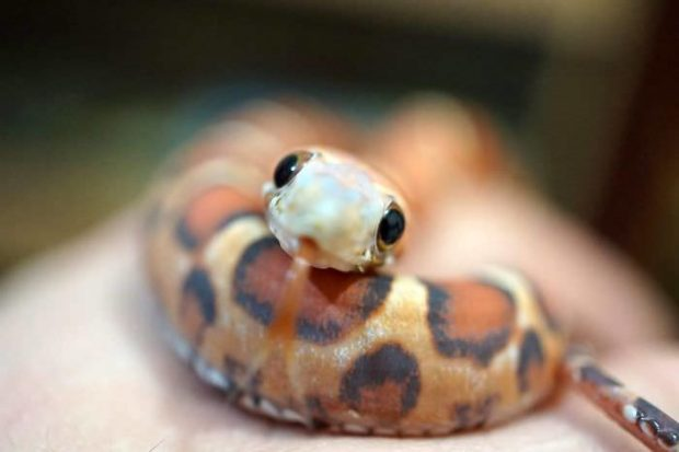 عکسهایی زیبا از مارهای کوچک و بامزه از سراسر جهان