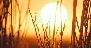 گرمترین سال زمین