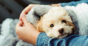 مردم حیوانات خانگی و سگ ها را بیشتر از انسانها دوست دارند!