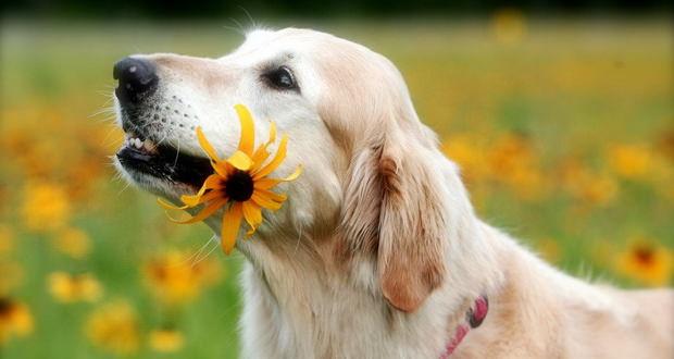 احساسات حیوانات تا چه حد پیشرفته بوده و قوای حسی جانوران چگونه است؟
