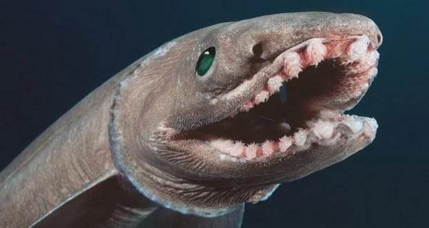 عجیبترین و ترسناک ترین هیولاهای دریایی سال 2017