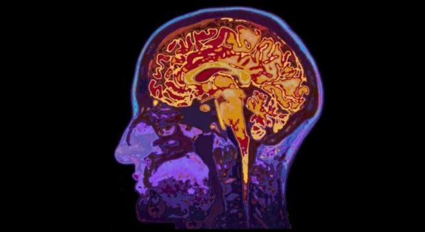 عجیب ترین اکتشافات علمی سال 2017 ؛ از قتلعام نورونها تا هیولاهای دریایی