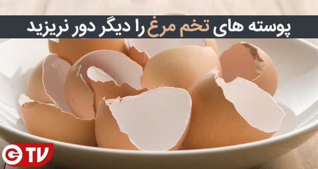 پوسته تخم مرغ را دیگر دور نریزید