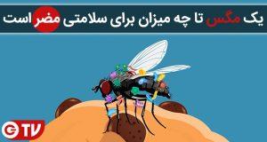 یک مگس تا چه میزان برای سلامتی مضر است