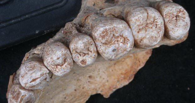فسیل دندان- قدیمی ترین فسیل انسان امروزی
