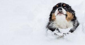 حیوانات در برف
