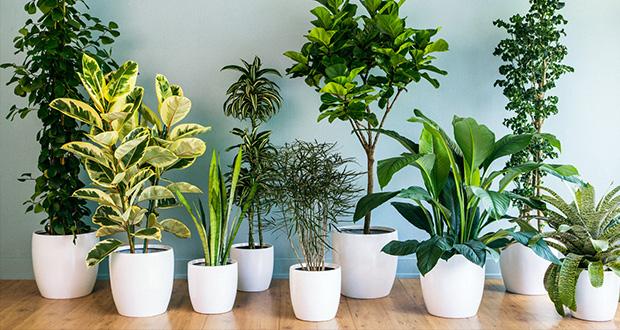 5 گیاه تصویه کننده هوا