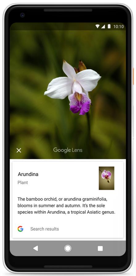 قابلیت گوگل لنز به زودی در دسترس همه کاربران قرار خواهد گرفت