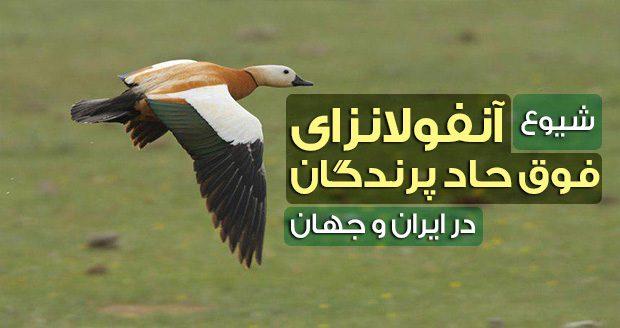 آنفولانزای فوق حاد پرندگان