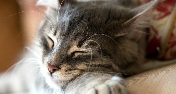 دانشمندان از ساخت نوع شگفتانگیزی از موسیقی مخصوص گربه ها خبر دادند!