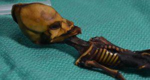آیا اسکلت عجیب کشفشده در صحرای شیلی مربوط به یک موجود فضایی است؟