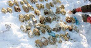 پاکتی مرموز حاوی 54 دست بریده شده انسان در سیبری پیدا شد!