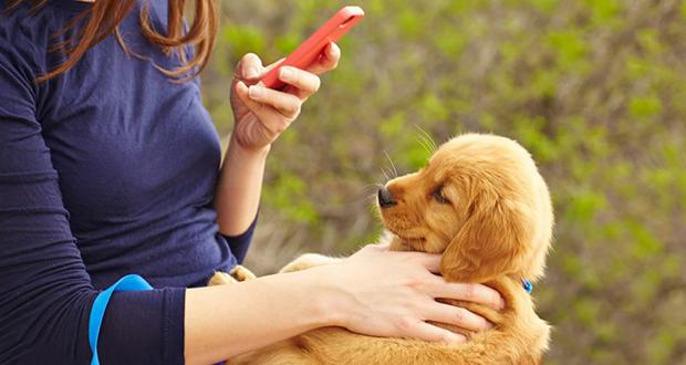 تشخیص نژاد سگ ها با استفاده از گوگل لنز امکانپذیر شد