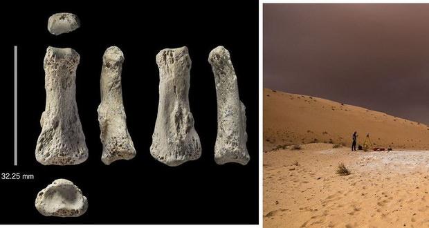استخوان انگشت 88 هزار ساله تاریخ تکامل بشریت را بازنویسی میکند!
