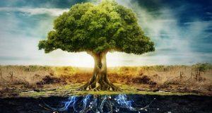 معروف ترین درختان مقدس دنیای اسطوره شناسی