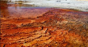 کشف فسیل سه میلیارد ساله