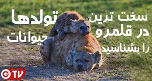 سخت ترین تولد ها در قلمرو حیوانات را بشناسید