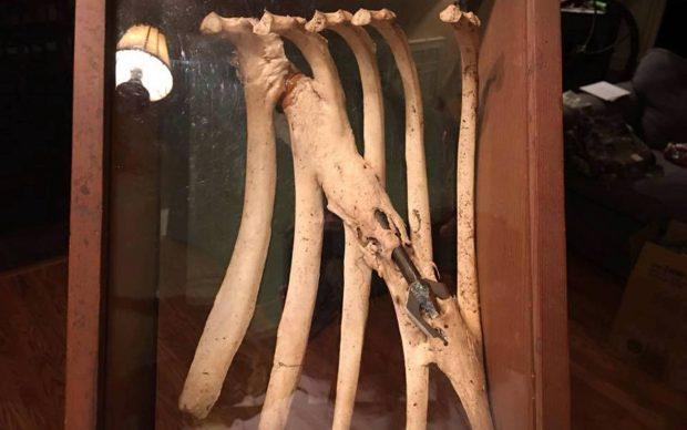آهوی دارای تیر پیکاندار داخل دنده