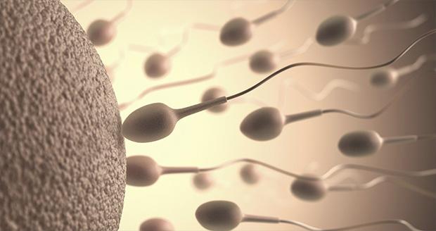 محرک اصلی شنای هدفمند اسپرمها