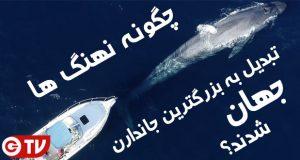 نهنگ ها