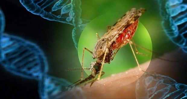 ارتش حشرات پنتاگون