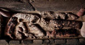 مومیایی گربه و سوسک