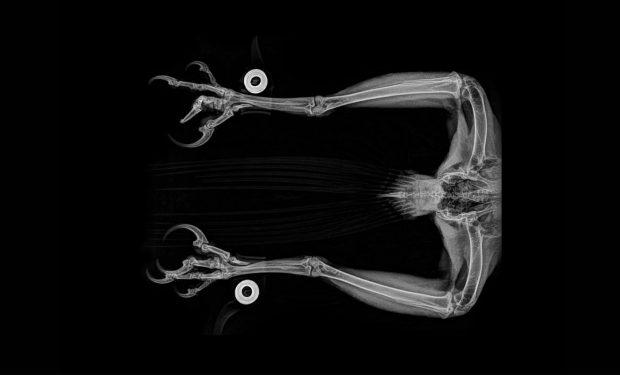 مجموعهای حیرتانگیز از تصاویر اشعه ایکس حیوانات باغ وحشی در آمریکا