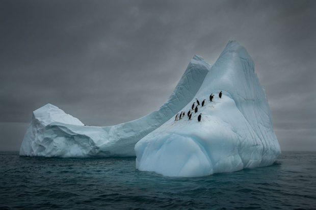 برندگان مسابقه عکاسی سیه نا 2018 مشخص شدند