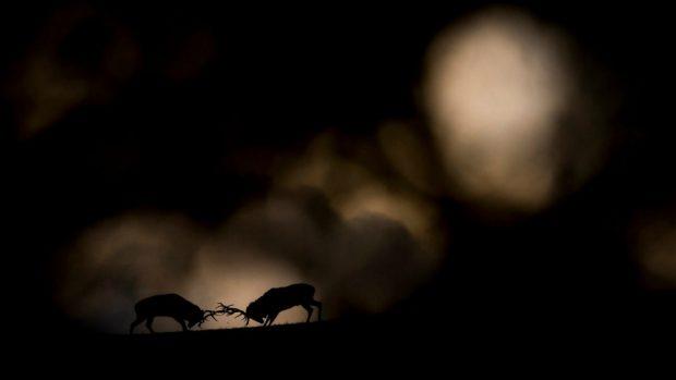 مسابقه عکاسی حیات وحش
