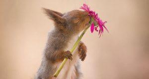 مینیمالهای زندگی چند سنجاب
