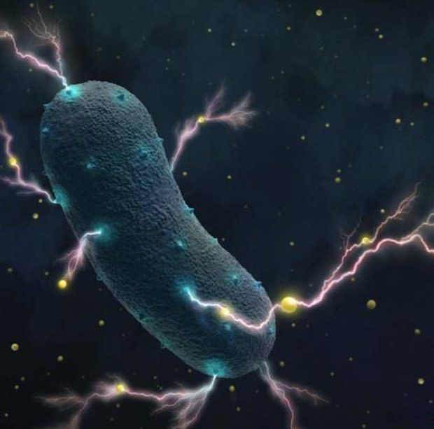 bacteria make electricity
