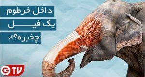داخل خرطوم فیل چه خبر است